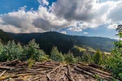 Foto av miljö- skada, skogsavverkning royaltyfria foton