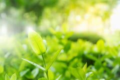 Foto av nya och gröna sidor på suddighetsgräsplanbakgrund fotografering för bildbyråer