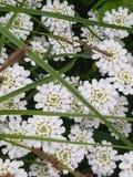 Foto av ovanlig skönhet, som fångade vita härliga blommor arkivfoto