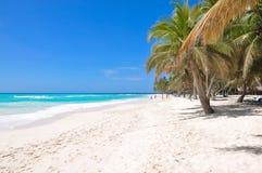 Foto av palmträd och vitsand på bakgrund för blå himmel Arkivbild