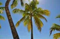 Foto av palmträd på bakgrund för blå himmel Arkivbild