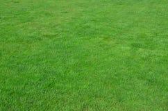 Foto av platsen med jämn-kantjusterat grönt gräs Gräsmatta eller gränd av nya gröna gras royaltyfri foto
