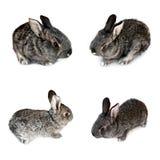 Foto av små kaniner som isoleras på en vit bakgrund Royaltyfri Bild