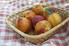 Foto av smakliga nektariner i korg Royaltyfria Bilder
