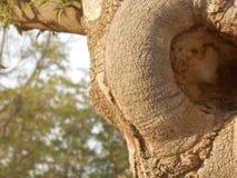Foto av stammen av trädet arkivbild