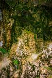 Foto av stentextur med mossa i grotta Royaltyfri Bild