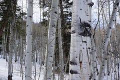 Foto av träd i Eagle, Colorado, skog royaltyfria foton