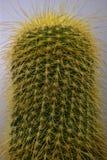 foto av växten i makroformat royaltyfria bilder