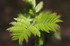 Foto av växter, blommor, natur royaltyfria foton