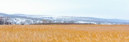 Foto av vinterrottingen med den dimmiga horisonten Royaltyfria Bilder