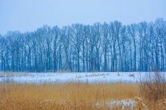 Foto av vinterträd nära snöig fält med rottingen Royaltyfri Foto