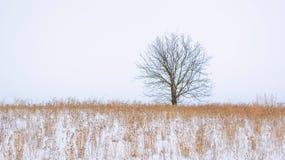 Foto av vinterträdet med fältet som täckas av snö Royaltyfri Bild