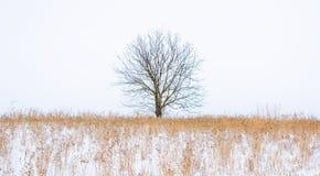 Foto av vinterträdet med fältet som täckas av snö Arkivfoton