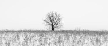Foto av vinterträdet med fältet som täckas av snö Arkivbild