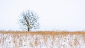 Foto av vinterträdet med fältet som täckas av snö Royaltyfri Fotografi