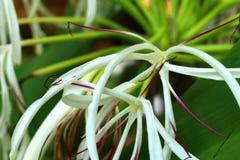 Foto av vita blommor, i natur eller att arbeta i trädgården Arkivfoto