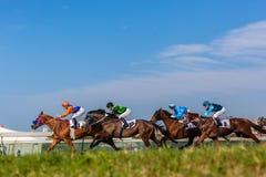 Foto bassa dell'erba di azione di corsa di cavalli Immagine Stock