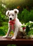 Foto bianca del cucciolo nel giardino di estate Immagine Stock Libera da Diritti