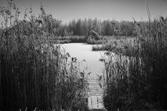 Foto in bianco e nero del paesaggio di inverno Immagini Stock