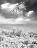 Foto in bianco e nero della foresta di inverno Immagini Stock Libere da Diritti