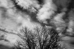 Foto in bianco e nero di Pechino, Cina Albero e cielo immagine stock libera da diritti