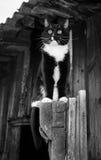 Foto blanco y negro de Pekín, China El gato blanco y negro se está sentando en puerta de madera de la casa de madera vieja Foto de archivo