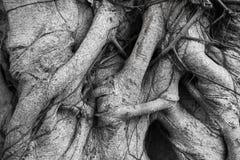 Foto blanco y negro de un fondo del árbol Imagen de archivo libre de regalías