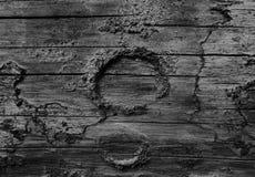 Foto blanco y negro de un registro anudado Fotografía de archivo libre de regalías