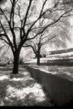 Foto blanco y negro infrarroja Imagen de archivo libre de regalías