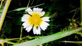 Foto-Blumen stockfotografie