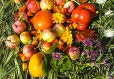 Foto bonita com maçãs, as folhas vermelhas, as flores calendula e as ervas em um fundo de madeira Foto de Stock