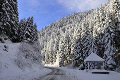 Foto bonita da paisagem da floresta do inverno imagem de stock royalty free