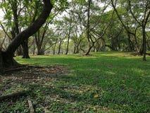 Foto borrada Fundo verde da árvore Vista do gramado da grama selvagem Céu claro foto de stock