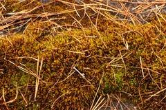 Foto bosachtergrond De herfst bosdraagstoel, mossen en naald Royalty-vrije Stock Foto