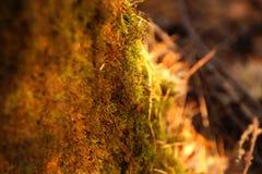 Foto bosachtergrond De herfst bosdraagstoel, mossen en naald Royalty-vrije Stock Foto's