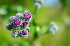 Foto brilhante do macro das flores Fotografia de Stock Royalty Free