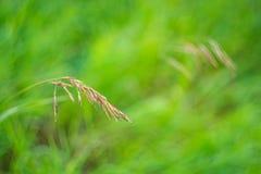 Foto brillante de la macro de las flores Foto de archivo