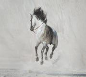 Foto che presenta il cavallo galoppante Fotografie Stock Libere da Diritti