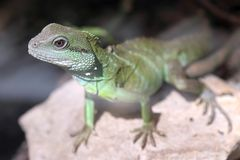 Foto china del primer del dragón de agua foto de archivo