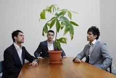 Foto común de los hombres de negocios jovenes que comtemplan problemas verdes fotografía de archivo libre de regalías
