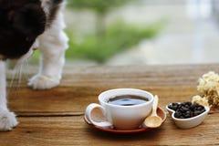 Foto común - el gato miente en la tabla al lado de la taza de café encendido Foto de archivo