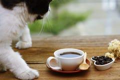 Foto común - el gato miente en la tabla al lado de la taza de café encendido Fotos de archivo libres de regalías