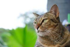 Foto común - foco selectivo que mira el gato fotografía de archivo