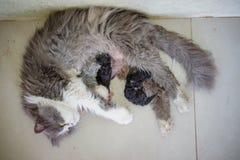 Foto común - gatos recién nacidos fotografía de archivo