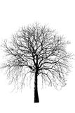 Foto común - perdió un árbol secado grande - aislada en el backgr blanco Foto de archivo