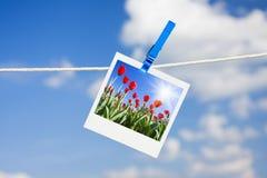 Foto com tulips fotografia de stock
