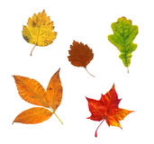 Foto composta das folhas de outono Fotos de Stock