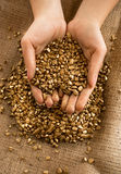 Foto conceptual da mulher que guarda poupanças de vida no ouro nas mãos Imagens de Stock