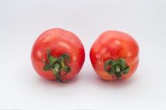 Foto conservada em estoque de dois tomates isolados no fundo branco fotos de stock royalty free