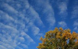 Foto conservada em estoque do céu e da árvore das nuvens fotografia de stock